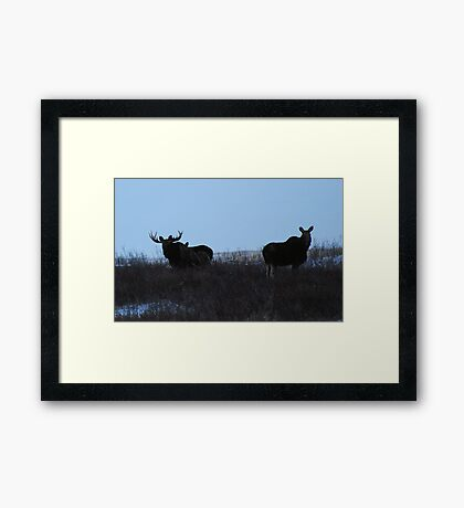 moose family photo Framed Print