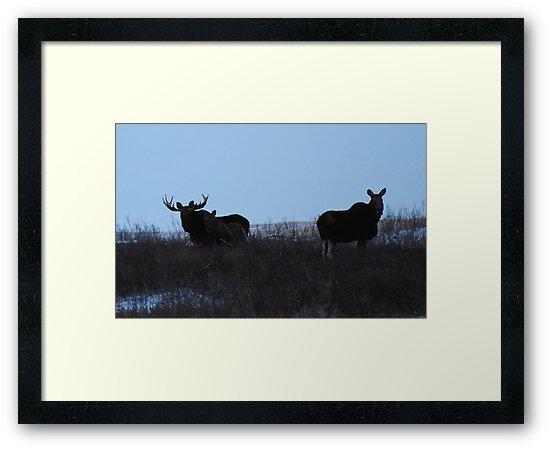 moose family photo by Heath Dreger