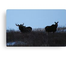 moose family photo Canvas Print