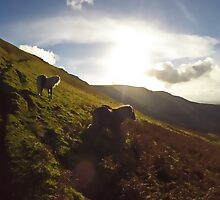 Brecon Beacons Wild Pony by Nick  Gill