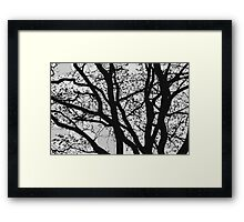 Tilia night silhouette Framed Print