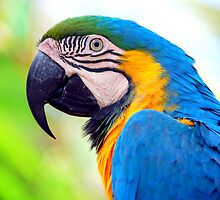 Macaw... by LjMaxx