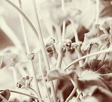 Rainy Morning 3 by Yevgeni Kacnelson