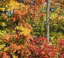 Autumn Splendour IV by Al Bourassa