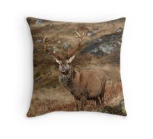 Red Deer Stag in winter. Throw Pillow