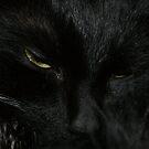 Black Amorek. by misiabe80