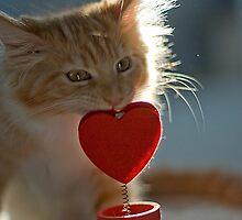 Valentine kitty by narabia