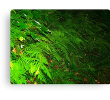 Wall of Wood Ferns Canvas Print