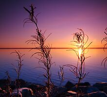 Sunset with plants in foreground by Sandra Kemppainen