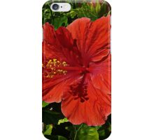 Red Caribbean Hibiscus iPhone Case/Skin