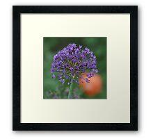 Purple Sun Burst! Framed Print
