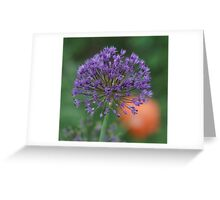 Purple Sun Burst! Greeting Card