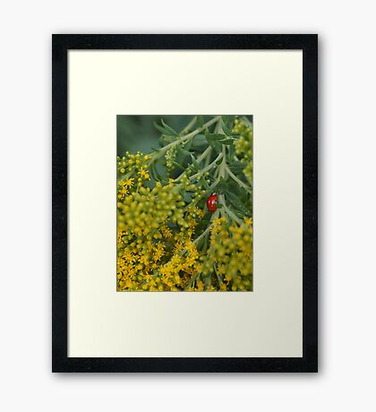 A Lady on a Stroll. Framed Print