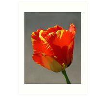 Flaming Tulip! Art Print