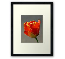 Flaming Tulip! Framed Print