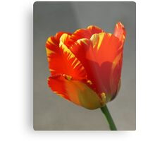 Flaming Tulip! Metal Print