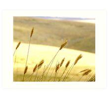 Prairie Grass Art Print