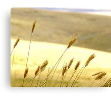 Prairie Grass Canvas Print