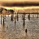 Lake Erling Stumps by wadesimages
