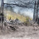 Syprus Trees II by wadesimages