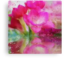 Hot pink Freesia flowers Canvas Print