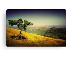 Top Tree Canvas Print