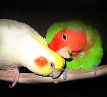 For the Love of Lovebird by TickerGirl