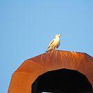 Seagull by kerryward