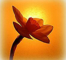 The Daffodil by Fara