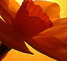 The Daffodil Sticker