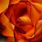 Passionate Petals by Creative Captures