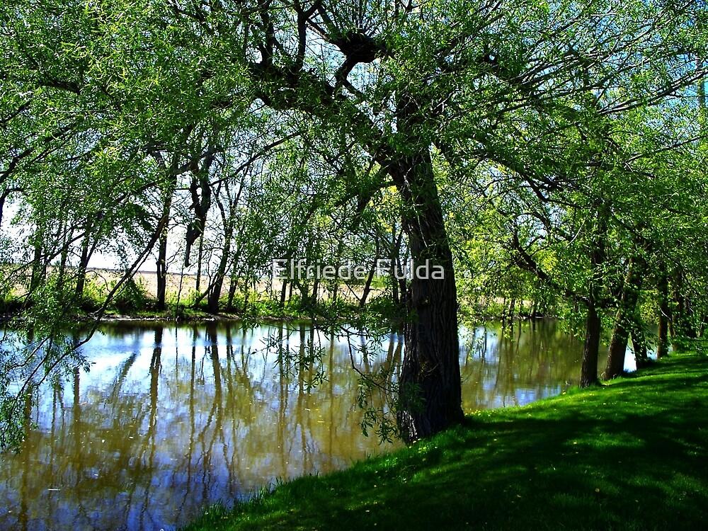 """The Willow"" by Elfriede Fulda"