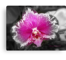 Lightly Touched Canvas Print