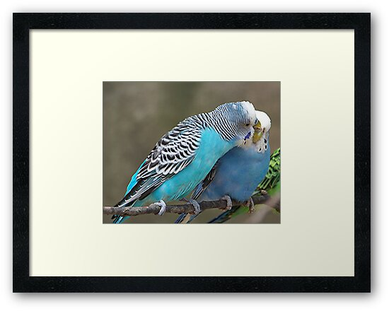 Love Birds by Glenna Walker