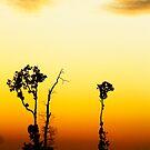 Twilight Beauty by Steven  Siow