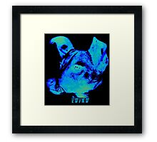 Sunwatcher: Laika Blue Framed Print