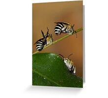 Native Bees Greeting Card