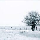Color Of Winter III by Pamela Hubbard