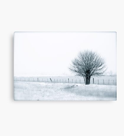 Color Of Winter III Canvas Print