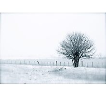 Color Of Winter III Photographic Print
