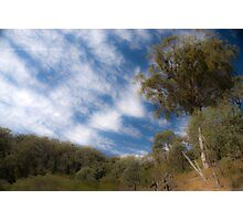 Nangar Woodlands Photographic Print