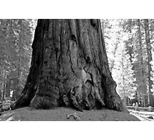 General Sherman Tree Photographic Print
