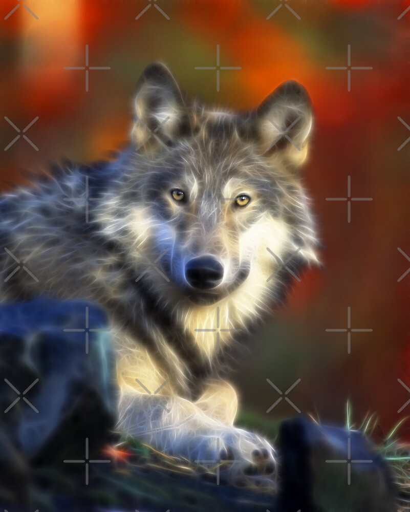 Lonely Wolf by Beverly Lussier