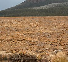 Mountains and Button Grass Plains by Leanne Davis