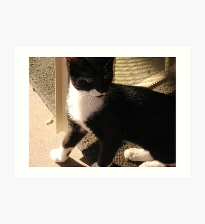 Tuxedo Kitty Art Print