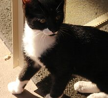 Tuxedo Kitty by down23