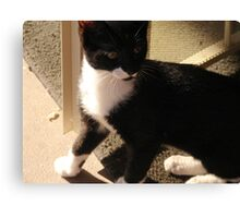 Tuxedo Kitty Canvas Print