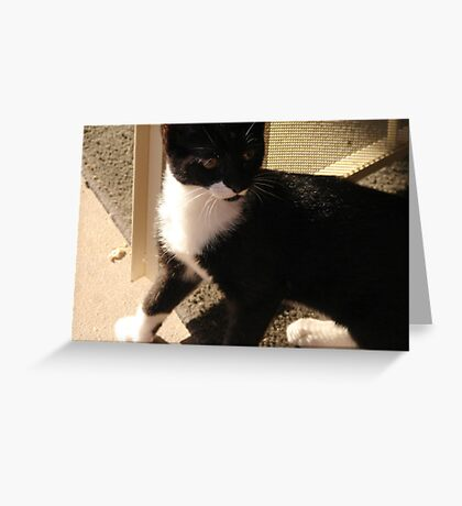 Tuxedo Kitty Greeting Card