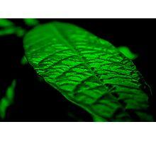 Fluorescent Green Photographic Print