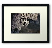 White Bengal Tiger Framed Print